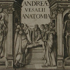 Image taken from our 1604 edition of Andreas Vesalius, Anatomia: De Humani Corporis Fabrica, RCSEd