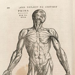 Image taken from our 1604 edition of Andreas Vesalius, Anatomia: De Humani Corporis Fabrica, RCSEd (1)