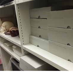 Some of the Collection Repackaged in the Museum & Archive Store